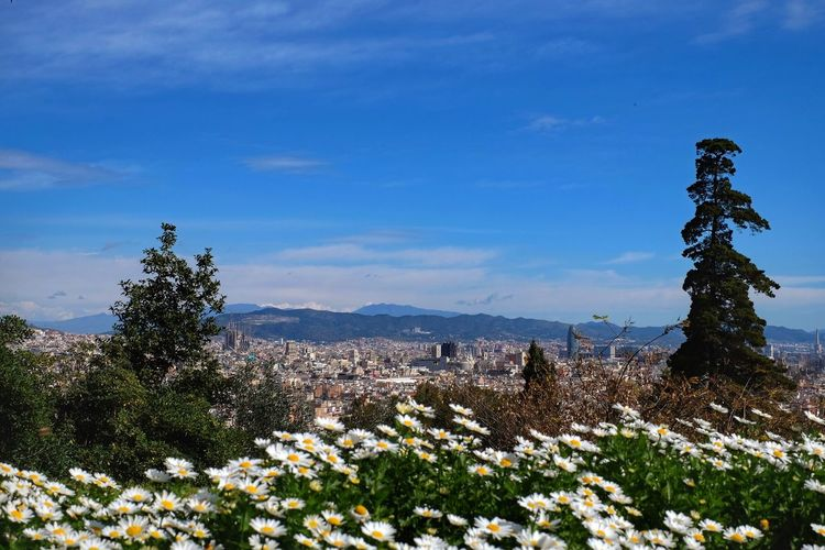 Springtime Montjuic Barcelona Barcelona, Spain Flower Growth Nature Beauty In Nature Plant Outdoors No People