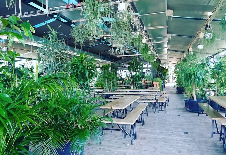 Growth Plant Green Color Greenhouse Beauty In Nature Architecture Nature Hfarm Jungalow Style Jungle At Home Greenery Green Green Green!  Green Nature Garden Photography