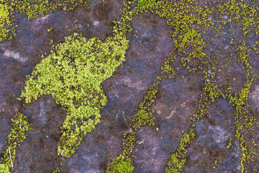moss Green Color Plant High Angle View Growth Moss No People Day Nature Directly Above Full Frame Outdoors Yellow Leaf Backgrounds Textured  Beauty In Nature Plant Part Close-up Grass Pattern Lichen