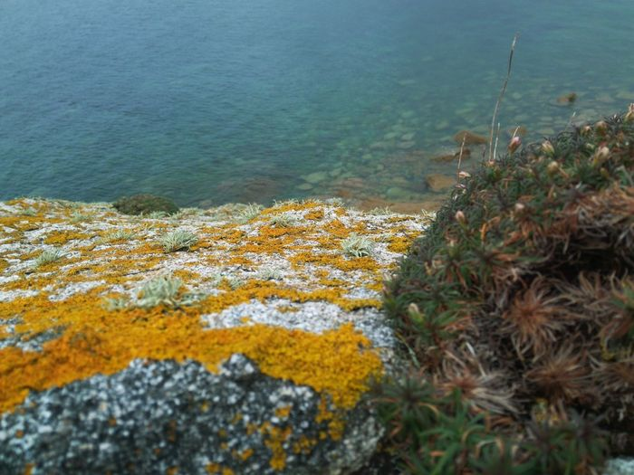 Lichen Nature French Coast Ocean Beach Water Plant Rock Rocks