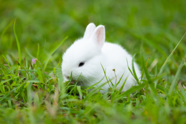 View of a rabbit on field