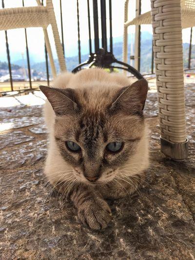You'rekindapawsome Cat Kittycat Beautiful Animal Portdesóller Mallorca Travel Summer Niceweather Findoftheday