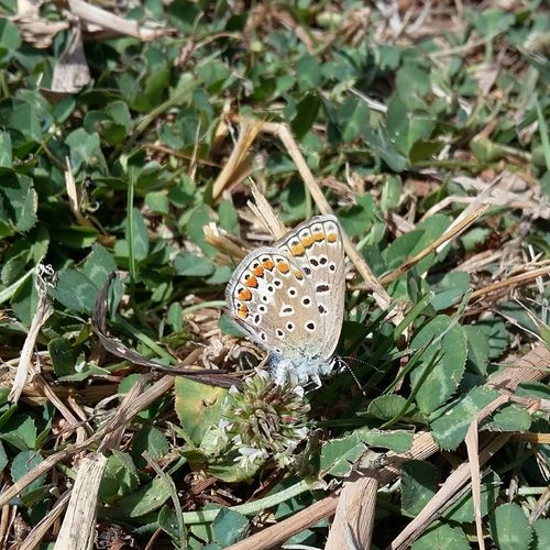 Animals In The Wild Insect One Animal Animal Themes Nature Animal Wildlife Multi Colored Colorcolorcolor EyeEmNewHere Beauty In Nature Farfallina Farfalla Butterfly Collection Butterfly