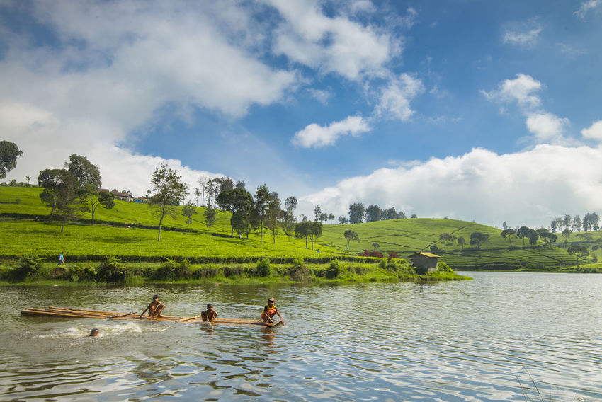 Kids playing in the midle of the lake between tea field