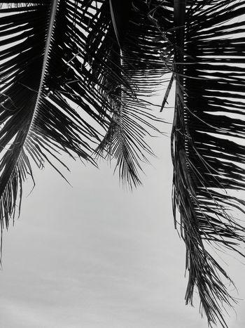 Coqueiros Sky