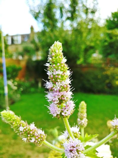 Close to home Nature Flower Plant Close-up Day Fragility Outdoors Freshness Sky Tree Beauty In Nature No People Let's Go. Together. EyeEmNewHere Sunny Afternoon Green Color Vibrant Colour Petal Sun Garden Pink Color