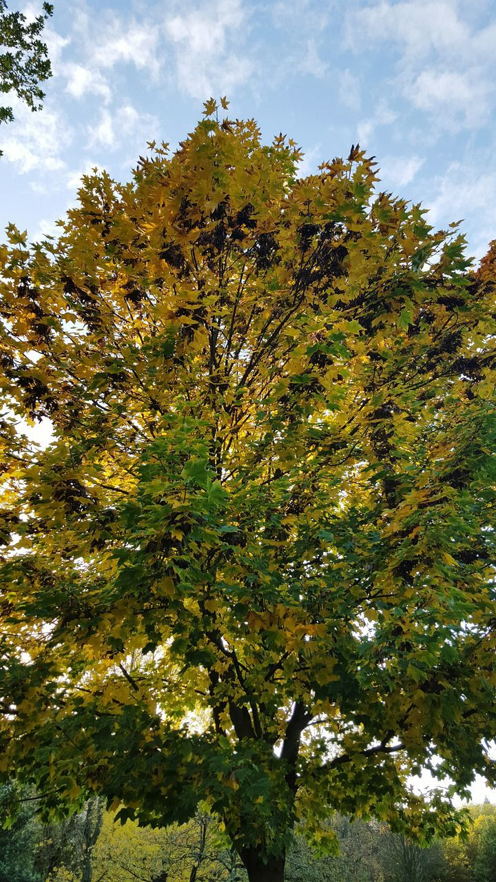 tree, growth, nature, low angle view, no people, tranquility, beauty in nature, sky, day, outdoors, branch