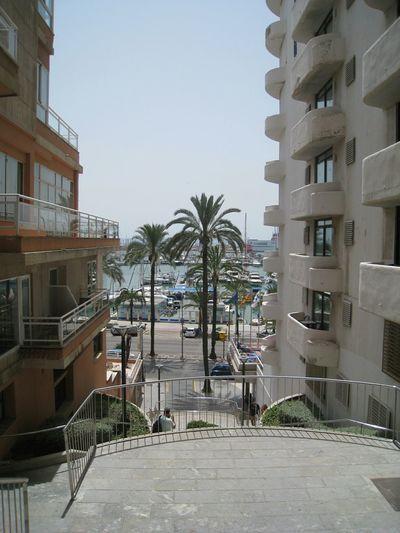 Mallorca Summer Palms Palmen Boote Yacht Street
