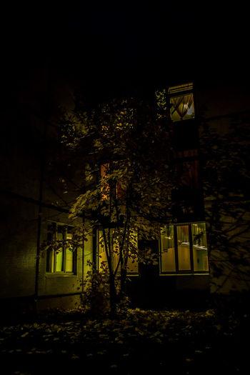 Maple Autumn Autumn Colors Autumn Leaves City Exterior Leading Leaves Maple Mystery Narrow Night Night Lights Nightphotography One Tree Alone Street Light Tree Window Window Light Yellow дерево Ночь окно осенние листья осень свет