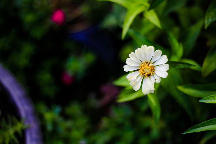 Flower Flowering Plant Freshness Plant Fragility Vulnerability  Petal Beauty In Nature Growth Inflorescence Flower Head Close-up Focus On Foreground Nature Day White Color Pollen No People Outdoors