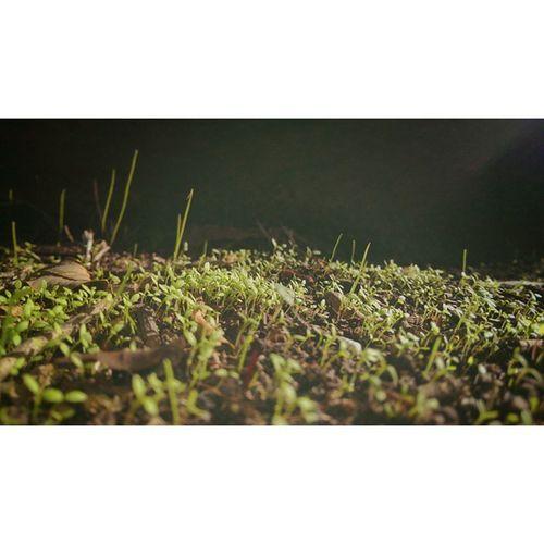 From death, new life arises... Likeaphoenix Shoots Grass Naturegram Nature Grass Circleoflife