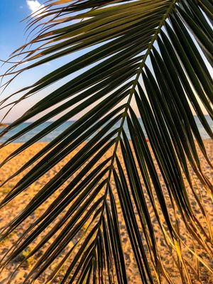 Part of a palm tree in a summer beach in a Greek town new moudania Summer Halkidiki Greece Growth Palm Leaf Plant No People Tree Nature Low Angle View Palm Tree Pattern Tropical Climate Outdoors Sky Day Sunlight Leaf Beauty In Nature Full Frame Backgrounds Natural Pattern Frond