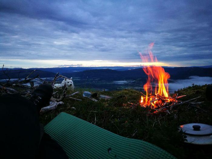 Dog near campfire at sunset