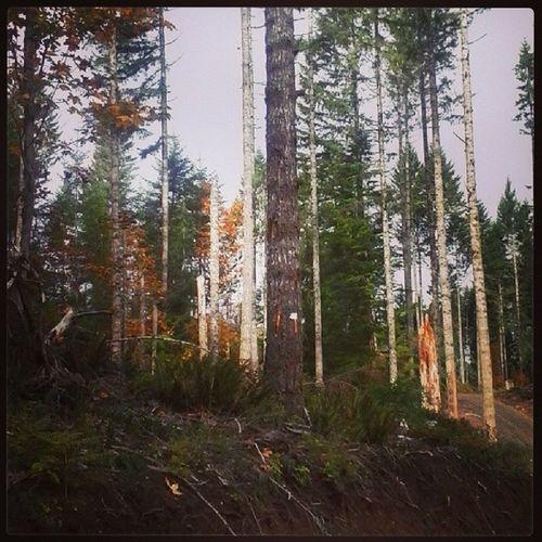 Just goofing off in the woods. Oregonforests Oregonbeauty Forests Gottaloveit
