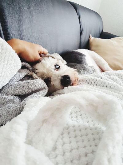 Blind Dog Chillin' Sunday Morning Love