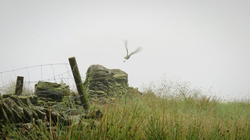 Grass Nature Outdoors Growth Fog Day Rural Scene Sky No People Beauty In Nature Irrigation Equipment Foggy Morning Curlew