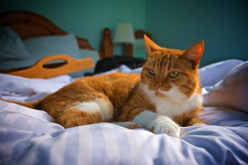 Close-up of cat looking away while resting on bed at home