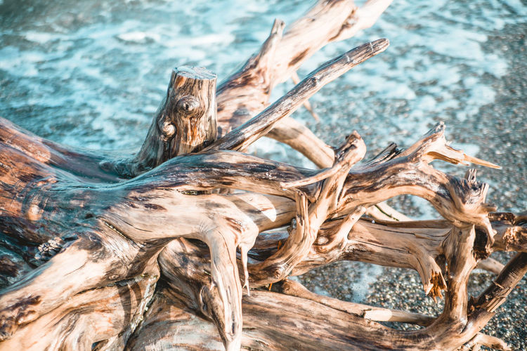 Close-up of driftwood on tree trunk in forest