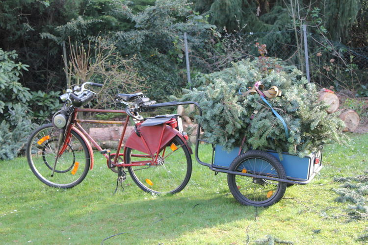 Vintage Moped with Bike Trailer transporting Branches Bike Trailer Branches Branches Of Trees Day Garden Garden Photography Gardening German Garden Grass Green Waste Growth Grünschnitt Wegbringen Lop Lop Transportation Moped Motor Bicycle Motorbike Nature No People Outdoors Tree Tree Branches Vintage Bike Vintage Moped Vintage Motorbike