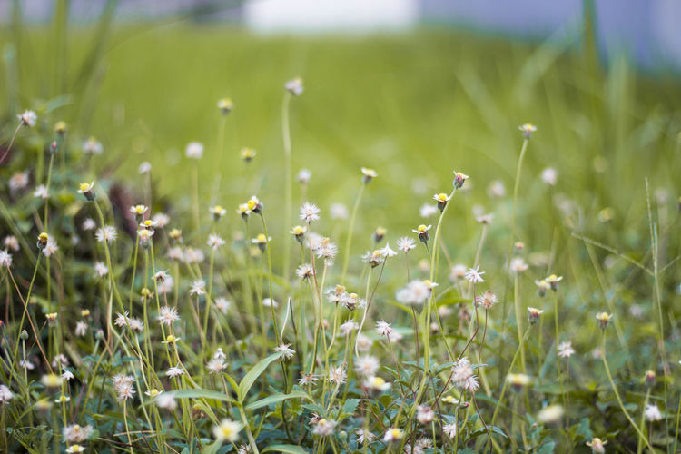 The dandelion... Plant Land Growth Field Beauty In Nature Green Color Freshness Flower Nature Grass Selective Focus Flowering Plant No People Tranquility Close-up Day Landscape Fragility Outdoors Environment Springtime Blade Of Grass