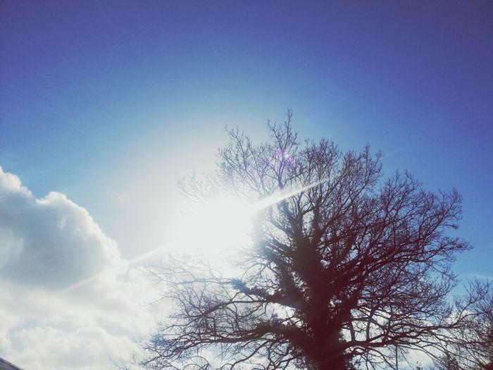 Beautiful Day Eyeemnaturelover Sunshine TreePorn a beautiful day to start a new job.
