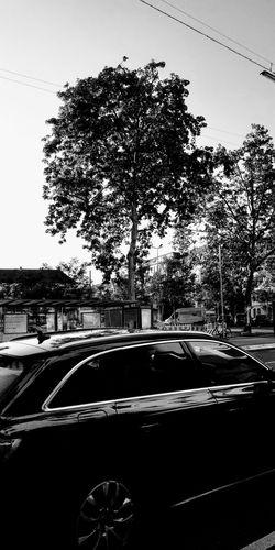 car Car Wash Tree Land Vehicle Car Interior Car Windshield Sky Car Point Of View Windshield Wiper Vehicle Interior Vehicle Seat Airplane Seat Metro Train Steering Wheel Train Interior Speedometer Vehicle Hood Rear-view Mirror Auto Racing Racecar Car Roof Formula One Racing Motor Racing Track Rainy Season Motorsport Monsoon Dashboard