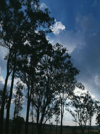 Tree Sky Landscape Nature Cloud - Sky No People Outdoors Natural Parkland Nightfalling Silhouette Silence White Clouds Blue Sky Tranquil Scene