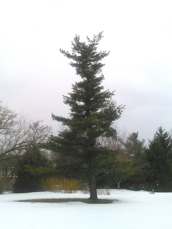 Tree Cool Tree Winter 2015