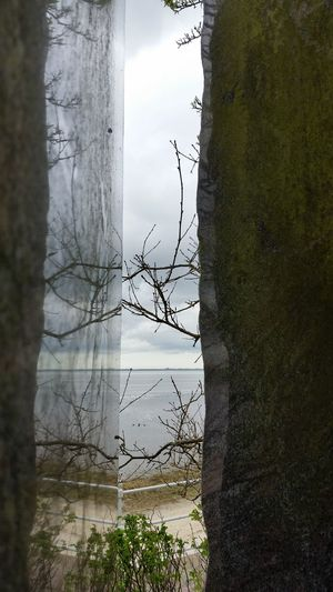 Tree Reflection Water Tree Trunk Outdoors No People Beauty In Nature Nature Dangast Hafen Maritime Sculpture Detail