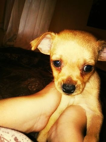the new family member baby chico #chico #is #his #name #being #a #player #is #his #game