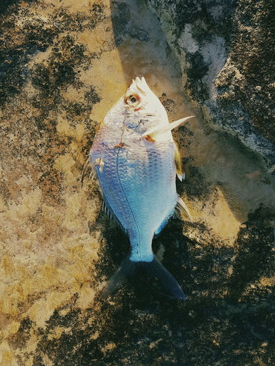 High Angle View Of Fish On Rock