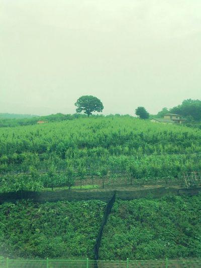 The Tree Yangjung Farm On The Farm