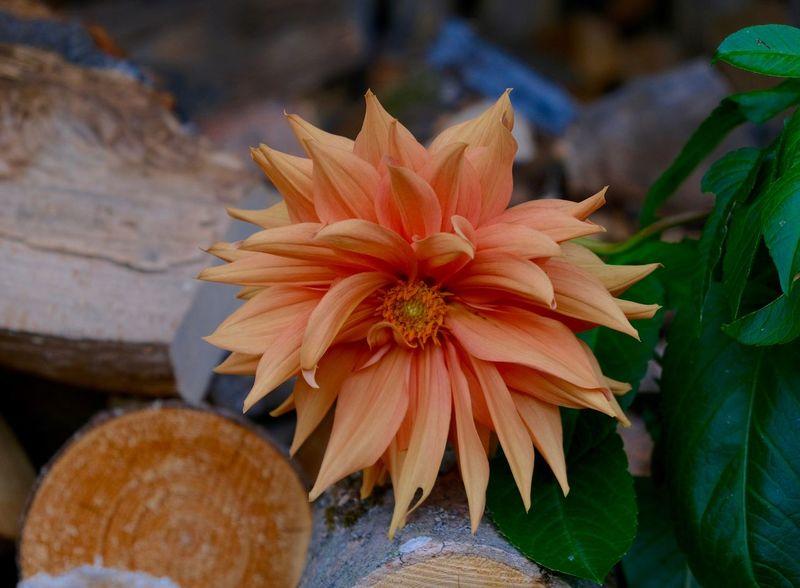 Flowering Plant Close-up Petal Flower Head Orange Color Leaf Plant Part Nature Beauty In Nature