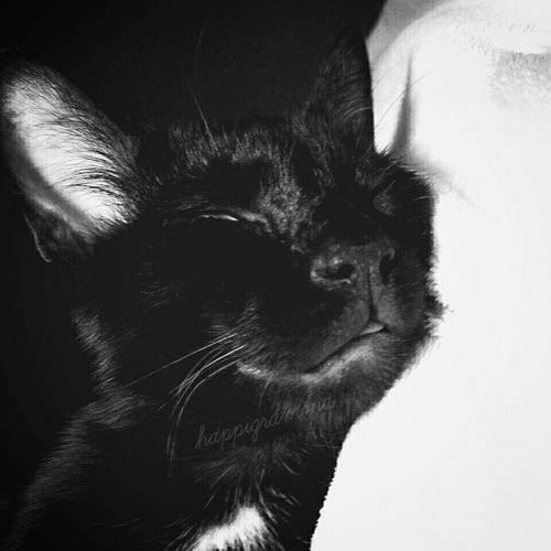 Catnsp Lovemykitty Sweetdreams  Tonguestuckout BLackCat Kittylove Thesmallestlittlethings Happigramma