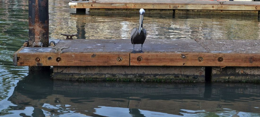 Pelican Fishing Lifestyle Rustic Water Birds Boat Docks Dockside View Water Reflection Hanging No People Day River Waterfront Animal Themes Nature Outdoors Wood - Material Architecture
