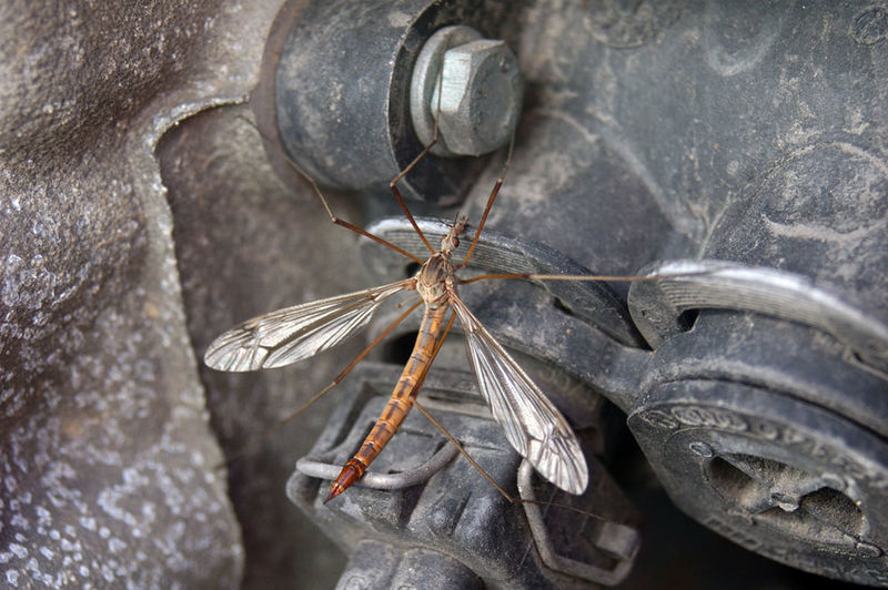 Close-up Insect
