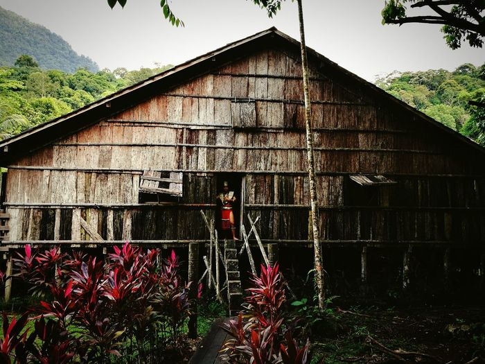 Architecture Built Structure Building Exterior Tree Day No People Outdoors Sky Nature Indigenous Culture Long House Iban Sarawak Cultural Village Indigenous Building