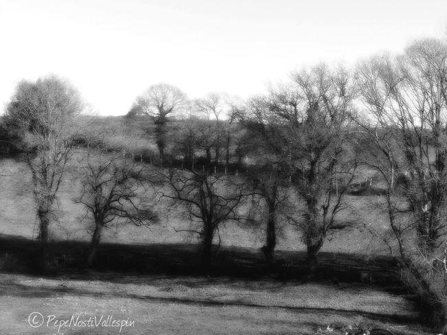 Poladesiero Blackandwhitephotography Blackandwhite Photography Blackandwhite Black&white Asturias Paraiso Natural🌿🌼🌊🌞 Trees And Nature Black And White Blancoynegro Pola De Siero