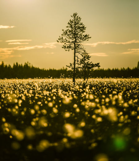 Scenic view of flowers growing on landscape against sky during sunset