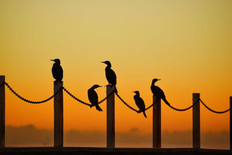 Sunset Sky Bird