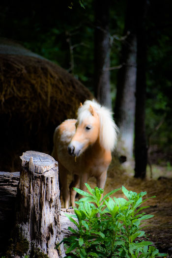 View of horse near tree trunk