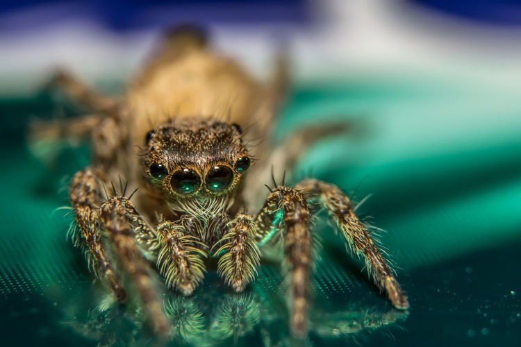 Macro Shot Of Spider With Reflection