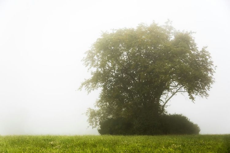 Im Nebel / In fog Taking Photos Eye4photography  EyeEm Gallery EyeEm Nature Lover EyeEm Best Shots - Nature