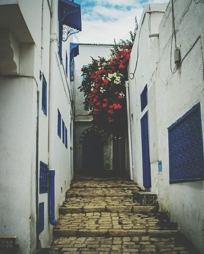 Hanging Out Talking Pictures Taking Photos My Photography Streetphotography Eyeem Tunisia Tunisia Sidi Bou Said Art Photography Love Photography