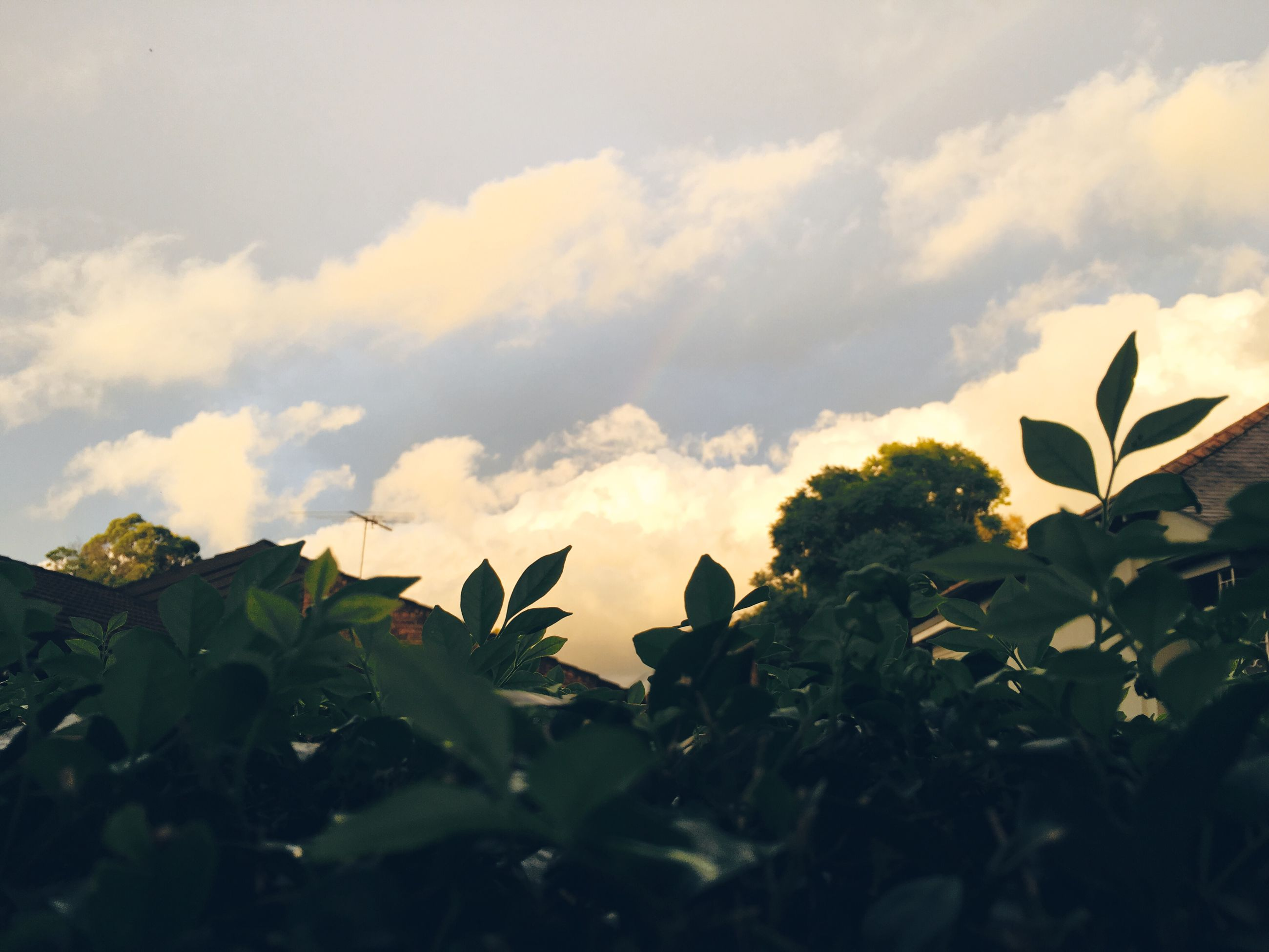 leaf, sky, plant, growth, nature, flower, cloud - sky, low angle view, beauty in nature, cloud, cloudy, close-up, fragility, freshness, day, outdoors, green color, no people, tranquility, stem