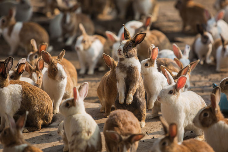 Animal Themes Large Group Of Animals Group Of Animals Animal Bird Vertebrate Mammal Animal Wildlife Animals In The Wild Livestock Domestic Animals Pets Domestic No People Day Nature Flock Of Birds Focus On Foreground High Angle View Herd