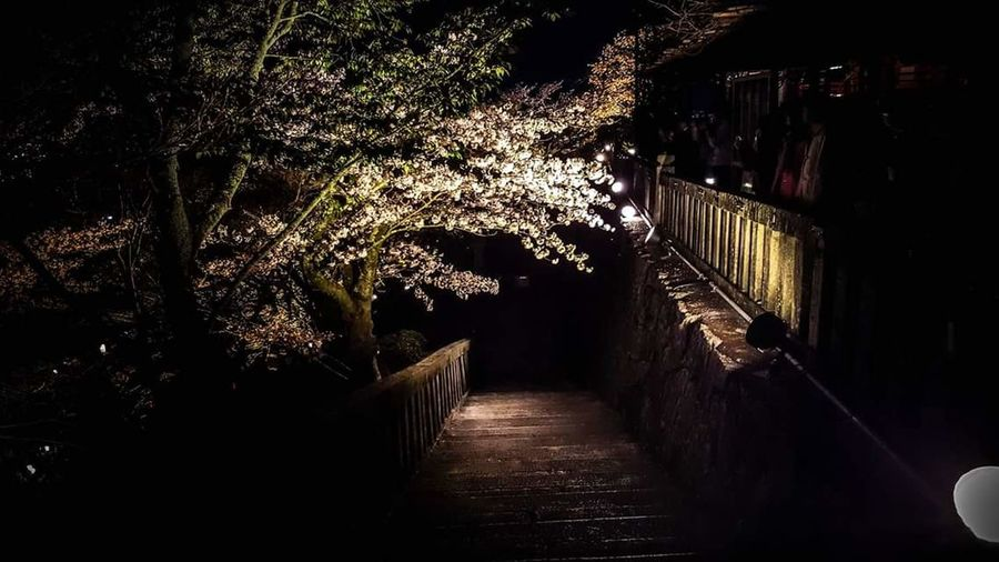 Kyoto Temple Night Photography Eerie Beautiful Eerie Culture Of Japan Heritage Site Outdoors Traveler Weekend Long Walks Kyoto At Night Cherry Blossoms Spring Sakura Trees