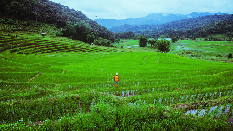 Man standing in agricultural field