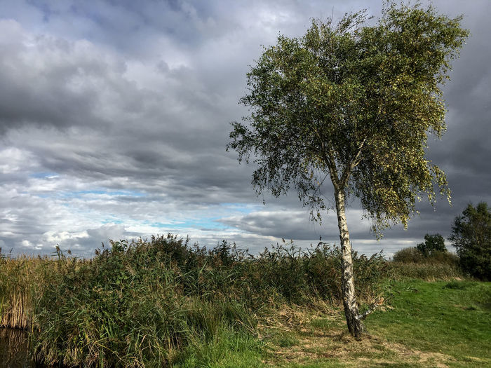 View of trees on landscape against clouds
