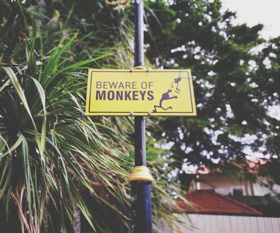 beware of monkey Text Communication Guidance Day Outdoors No People Close-up Road Sign Teluk Cempedak Kuantan Pahang Darul Makmur HuaweiP9 Huaweiphotography Huawei Shots Dual Camera Leica Lens
